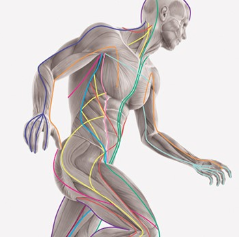 Anatomy trains courses uk